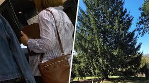 Christmas Tree Rockefeller 2017 by What U0027s Next Election Day 2017 Rockefeller Christmas Tree Arrives