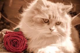 kitty cat free photo feline kitty cat pet kitten max pixel