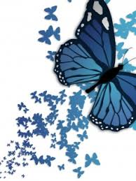 Blue Butterfly Wide Wallpapersultra Hd 4k Wallpapersimages