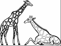 Surprising Giraffe Clip Art Black And White With Coloring Pages For