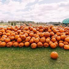 Pumpkin Patches In Bakersfield Ca by 122 Best Halloween U0026 Pumpkins Images On Pinterest Cool
