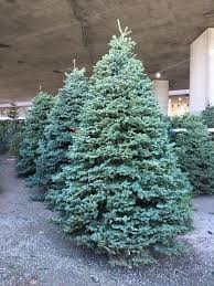 Brents Christmas Trees