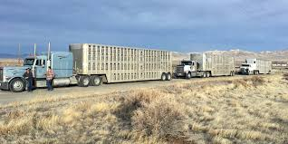 100 Trucking Equipment And Willow Creek Ranch