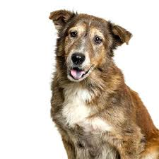 Large Dogs That Dont Shed by Inside House Dogs That Dont Shed The Most Popular Large Dog Breeds