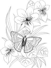 Butterfly Coloring Pages 38