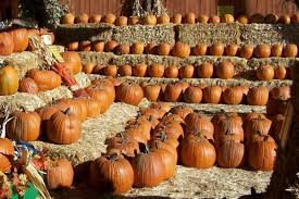 Macdonald Ranch Pumpkin Patch Hours by Don U0027t Miss These 10 Great Pumpkin Patches In Arizona This Fall