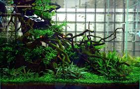 Aquascape Nature Aquarium And Wiki Appartment Aquascape Waterfall ... 66 Gallon Bookshelf Aquarium The Planted Tank Forum Shop Pond Pumps At Lowescom Kate Will Polywood Fniture 28 Images 174 Shd19 Seashell Grillo Rugs Soumac 8019 Rug Outlet And Care Home Theater Decorations D 233 Cor Garden Shed 6 X 3 Keter Plastic Wooden Aquascape World Standard Rating In The Repair Renovation Service Contractors Contractor Aquascapes Owensboro Ky Homedesignpicturewin