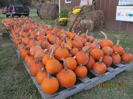Best Pumpkin Patch Near Corona Ca by Home