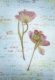 43 best pressed flowers images on Pinterest