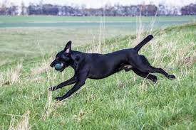 Non Shedding Dogs Small To Medium by The 20 Best Dog Breeds For Runners Outside Online