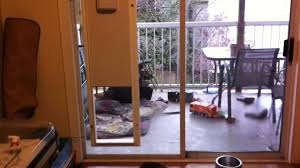 Doggie Door For Patio Door Canada by Electronic Doggie Door Anyone Who Owns A Dog Knows That They