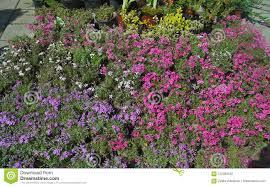 100 Blooming House Various Flowers In Flower Shop Stock Image