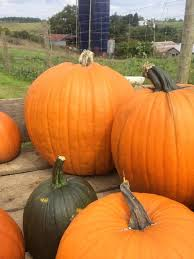 Milton Pumpkin Festival Pageant by Don U0027t Miss These 9 Great Pumpkin Patches In West Virginia This Fall
