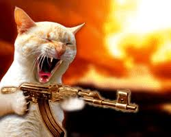 thug cat cat gun gif find on giphy