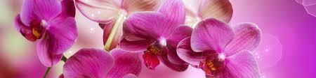 fototapete bei efototapeten de orchidee