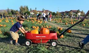 Daves Pumpkin Patch Brandon Fl by Fall Activities For Families Around Tampa Bay Wtsp Com