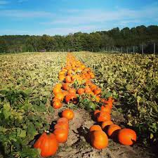 Pumpkin Farms In Bay County Michigan by It U0027s Easy To Buy Nearby When You Visit Your Local Cider Mill