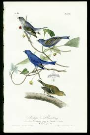 Audubon First Edition Birds Of America 1840