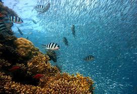 Sea Floor Spreading Model Worksheet Answers by 4b Marine Biology Percival U0027s Science