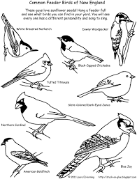 7 Images Of Bird Feeder Coloring Pages Printables