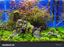 Plant Aquarium Aquascaping Stock Photo 65827918 - Shutterstock Out Of Ideas How To Draw Inspiration From Others Aquascapes Aquascaping Aquarium The Art The Planted Plant Stock Photo 65827924 Shutterstock Continuity Aquascape Video Gallery By James Findley Green With River Rocks Aqua Rebell Qualifyings For 2015 Maintenance And Care Guide Outstanding Saltwater Designs 2012 Part 1 Youtube Dennerle Workshop Fish
