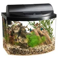Extra Large Aquarium Decorations by Best Betta Tank Reviews Of The Best Betta Fish Tanks Of 2016