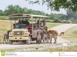 Safari Truck Surrounded By Animals Editorial Stock Image - Image Of ... Illustration Vector Photo Free Trial Bigstock Safari Trucks What To Carry Tourists In Tional Parks Top Auto Blog Truck Rims By Black Rhino China Modern Popular Double Ladder Car Roof Tent For Fileexodus Safari Truck 8209005137jpg Wikimedia Commons Surrounded By Animals Editorial Stock Image Of Mod The Sims Pickup Amazoncom Blue Hat Rc Off Road Toys Games Trucks Costa Rica Gallery Eastern Surplus In African Savannah Catoctin Zoo Zoochat
