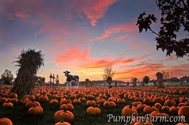 Clarence Pumpkin Farm Trebuchet by The Top 28 Farms For Fall Fun In The Us 2014 Funtober