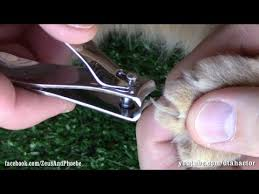 how to cut a cats nails how to trim cut cats claws step by step tutorial