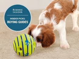 Best Type Of Flooring For Dogs by The Best Dog Toys You Can Buy Business Insider