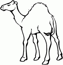 Ordinary Zoo Animals Coloring Pages Image 9