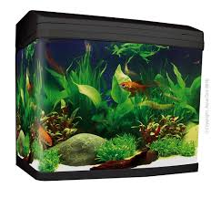 Aquarium Supplies | Aquariums & Stands | Petbarn Pets As Pilgrims Photos Peoplecom Contra Costa Animal Services Home Facebook 180 Best Dog Of Honor Images On Pinterest Marriage Wedding Dogs Bird 5 Darnick Street Underwood Qld 4119 Indtrialwarehouse For Pet Food Care Accsories Big W 91 Dogs In Weddings Shop Warehouse Buy Supplies Online Petbarn 332 Of Course My The Hooves And Paws Rescue Heartland Inc A Place To Heal