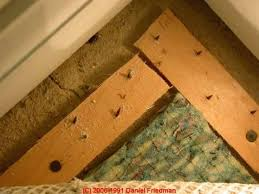 Plywood Under Carpet How To Lay On The Floor