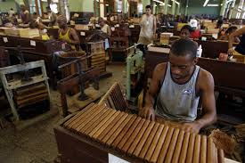 The Cuban Government Has A Monopoly On All Tobacco Cultivated Island It Is Shipped To 40 Cigar Factories In Cuba Where Leaves Are Rolled Into