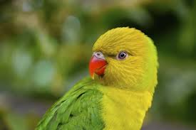 50 Most Beautiful Exotic Animals From The Tropics Wow Amazing