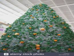 Xmas Tree Waterer by Christmas Christmas Tree Water Smells Like Vomit Watering