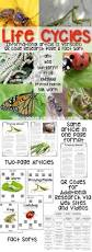 Life Cycle Of A Pumpkin Seed Worksheet by Best 25 Plant Life Cycles Ideas On Pinterest Teaching Plants
