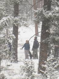 Christmas Tree Permits Colorado Buffalo Creek by Christmas Tree Permits Colorado Christmas Lights Decoration