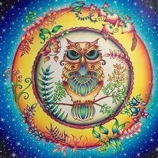 12 Best Owl