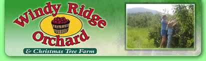 Christmas Tree Farm Near Lincoln Nh by Apple Picking New Hampshire Pick Your Own Nh Windy Ridge Orchard