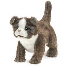 Shih Tzu Dogs For Adoption In Golden Colorado PetCurious