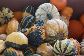 Pumpkin Picking In Ct by Averill Farm In Washington Connecticut Day Trips