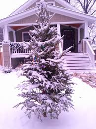 Christmas Tree Shop North Attleboro Massachusetts by Elmhurst Front Yard Tree Tradition 2011