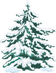 Colorado Springs Christmas Tree Permit 2014 by Web Design Evergreen Trees Evergreen And Clip Art