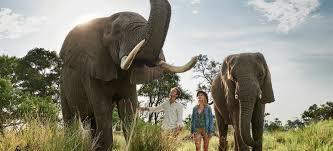 100 Flying Cloud Camp Sanctuary Baines Okavango Delta Botswana Sanctuary Retreats
