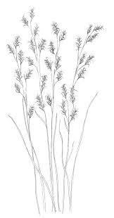 Grass And Plants Coloring Pages