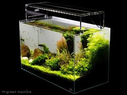 Aquascape Tutorial Guide By James Findley & The Green Machine ... Aquascape Designs For Your Aquarium Room Fniture Ideas Aquascaping Articles Tutorials Videos The Green Machine Blog Of The Month August 2009 Wakrubau Aquascaping World Planted Tank Contest Design Awards Awesome A Moss Experiment Driftwood Sale Mzanita Pieces Two Gardens By Laszlo Kiss Mini Youtube Warsciowestronytop