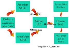 ph aquarium eau douce commencement guide du débutant aquariophilie eau douce