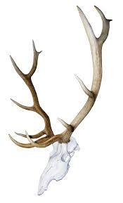 Moose Shed Antler Mounting Kit by Elk Record Keeper Skull Kit Mountain Mike U0027s Reproductions Co