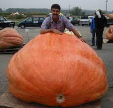 Canby Pumpkin Patch by 2003 Steve Daletas And His 1 385 Pound World Record